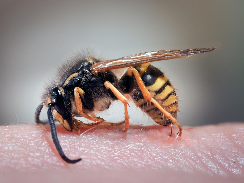 ハチ毒アレルギーの恐ろしさに迫る